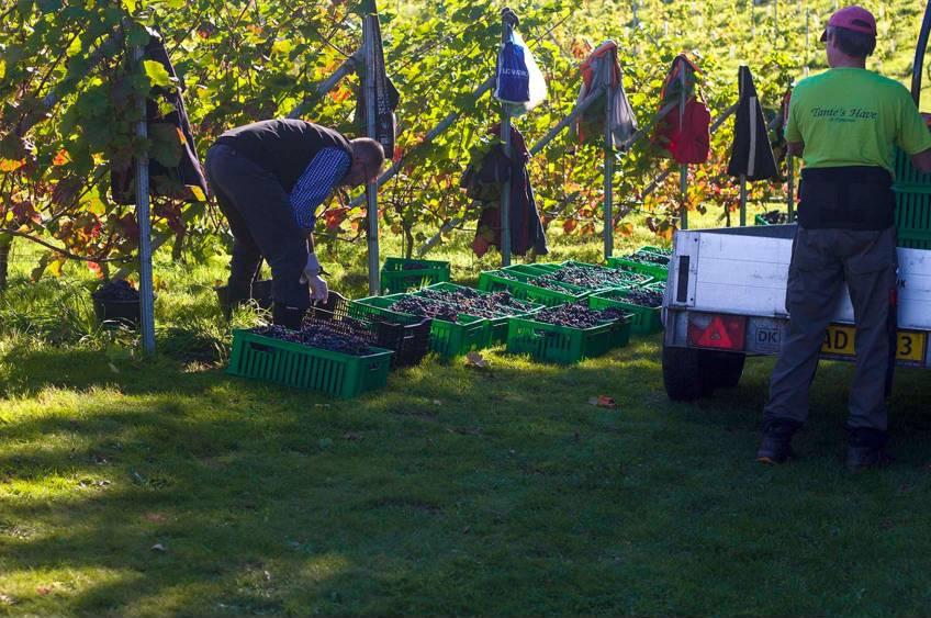 Vinsmagning i Danmark hos en af de bedste danske vinbønder